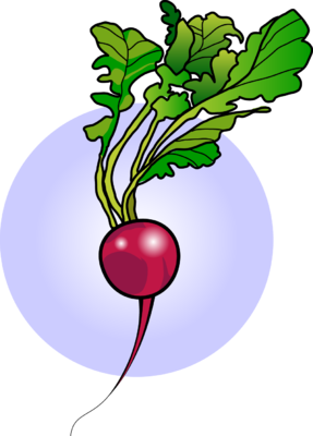 image radish food clip art christart com rh christart com radish clipart black and white radish plant clipart