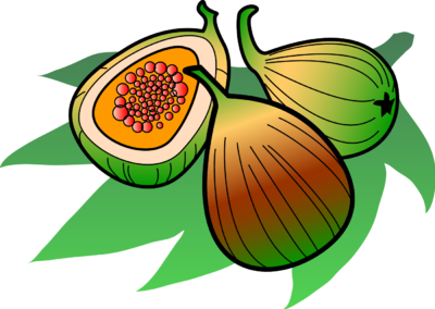 Image: Figs | Food Clip Art | Christart.com