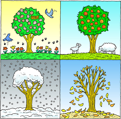 Image result for four seasons drawings for kids