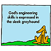 God's engineering skill is expressed in the sleek greyhound