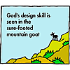 God's design skill is seen in the sure-footed mountain goat