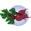 Beets | Food Clip Art
