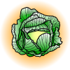 Cabbage | Food Clip Art