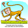 If humans came from monkeys, how come there are still monkeys?