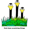 This images is of some silly birds to remind us that God does surprising things.