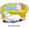 Baby in Manger with Lamb