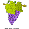 Grapes - Jesus is the True Vine