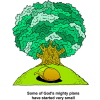 This is a cartoon style drawing of a big oak tree with an acorn in front of it. The purpose of this illustration is to remind us: Some of God's mighty plans have started very small.