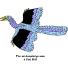 The archeopteryx was a true bird