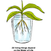 Hydroponics - All living things depend on the Water of Life