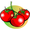 Tomatoes | Food Clip Art