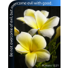 "This is a photograph of two yellow flowers and the Romans 12:21 verse, ""Be not overcome of evil, but overcome evil with good."" Perfect for a church bulletin!"