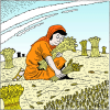 Let her glean even among the sheaves and reproach her not | Ruth Clip Art